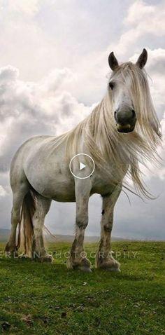Horse Senior Pictures, Softball Senior Pictures, Pictures With Horses, Cheer Pictures, Animal Pictures, Senior Guys, Senior Photos, Cute Horses, Beautiful Horses