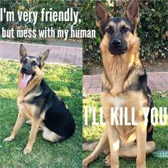 The German Shepherd I hope Frankie is this way with the kids