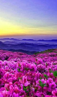 Ideas beautiful nature photography flowers scenery for 2019 Pretty Pictures, Cool Photos, Flower Pictures, Beautiful World, Beautiful Places, Beautiful Flowers Photos, Amazing Places, Amazing Nature, Belle Photo