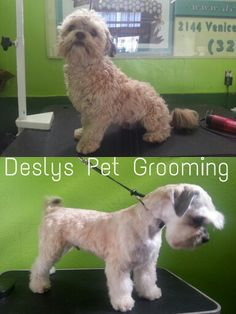 #petlovers #grooming #doggrooming #catgrooming #dog #poochie #pet #love #rescue #newlook #cleandog #cleanpooch #cleanpet #healthypet #healthyfriend #bestfriend #buddy #poochlove #pets #woof #paw #pet #deslyspetgrooming #petspa #doglovers #animallovers #birds #cat #catgrooming #birdgrooming #parrots #groomingdiscounts #petnail #petidtag #petstore #petsupplies #petmerchandise #petnews #petinfo #petretail #petboutique #birdfood #birdcage #westLA #Westhollywood #hollywood #losangeles #deslyspg