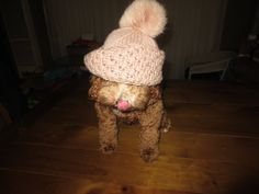 #mellothespoodle #bearsandbuttons
