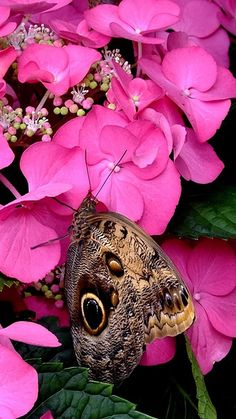 Butterfly - Looks like the camouflage wings of a beautiful Blue Morph. Butterfly Kisses, Butterfly Flowers, Butterfly Wings, Beautiful Butterflies, Flying Flowers, Flowers Garden, Pink Flowers, Chenille, Beautiful Creatures