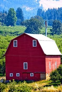 Old red barns remind me of my youth. Can smell the hay, horses and the years. So lovely and bucolic.