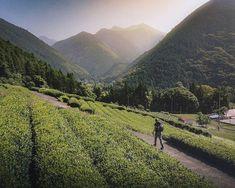 Day 12: Walking through a tea plantation. . . . #japan #tea #green #hikingculture #hikingworldwide #mountains #hiking #hikingadventures #travel #travelphotography #travelgram #passionpassport #welivetoexplore #earthpix #nature #lifeofadventure #tourtheplanet #letsgosomewhere #picoftheday #landscape #landscapephotography #wanderlust #ourplanetdaily #stayandwander #mothernature #wildernessculture #wonderful_places #exploretocreate #theglobewanderer #backpackersjournal Landscape Photography, Travel Photography, G Adventures, Wonderful Places, Wilderness, Wanderlust, Hiking, Tours, Culture