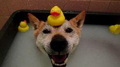 A Dog Hot Tub