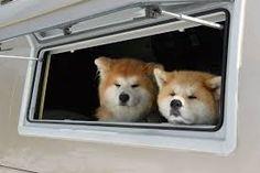 「雪国の犬」の画像検索結果