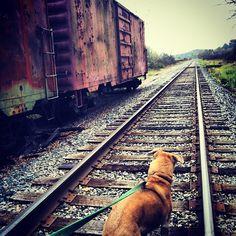#train #nature #fall photo by jayboy075
