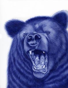Bear drawing done with a ballpoint pen by Sarah Esteje. #art #pen #pens #ballpoint #ballpointpen #penart #bear #wildlife #nature #animals Biro Art, Ballpoint Pen Art, Ballpoint Pen Drawing, Animal Paintings, Animal Drawings, Art Drawings, Drawing Animals, Pencil Drawings, Pen Illustration