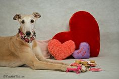 "Saying ""I Love You"" to your dog is easy. Don't forget to celebrate Doggy Valentine's Day on February 13. -- Tales and Tails #ValentinesForDogs"