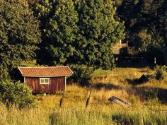 Summer. Sweden.