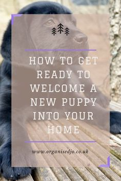 Welcoming a new puppy into the home is an exciting time, but do you know what you need to make the home coming as comfortable as possible? Take a look at our list of what we brought to help our new puppy feel at home.