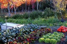 Just because the weather is getting cooler and the days shorter doesn't mean your garden is completely done!