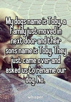 Why they would even ask that I mean it's a dog! You rename your son!