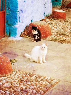 Cats in Symi, a key location in Terrible With Raisins!