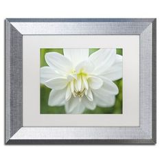 Trademark Art White Dahlia by Cora Niele Framed Photographic Print Size: 1