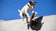AMAZING DOGS 🐶 SKATEBOARDING Dogs (HD) [Epic Laughs]