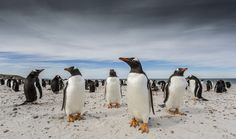 Barry Robertson and his image, Bleaker Island, in the Falkland Islands