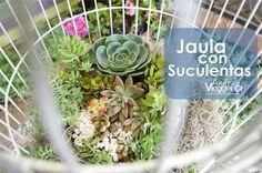 Jaula con Suculentas     Succulents birdcage
