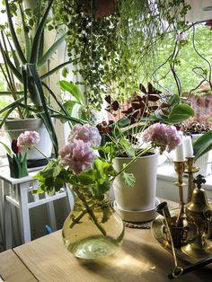 Urban Jungle Bloggers: Plants & Flowers by @nini_tjader