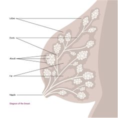 Great post on the anatomy of the breast and how to maximize your milk supply