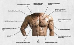 Chest exercises blueprint for every part of the chest muscle. Every chest part has its own unique chest exercise that targets him best, check it out now! Best Chest Exercises, Chest Workouts, Gym Workouts, Health Fitness, Muscle Fitness, Mens Fitness, Fitness Tips, Fitness Motivation, Mens Tattoos Chest