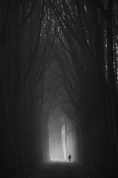 Moen in bos Black And White Photography, Black White Photos, Serenity, Monochrome, Mystery, Dark Forest, Light And Shadow, Portrait, Paths