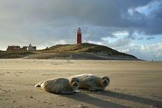 Zeehonden op het strand bij de vuurtoren