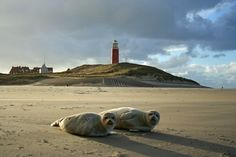 Texel - The Netherlands  | repinned by www.texelbier.de