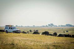 Get closer with a Safari Camper. South Africa Safari, Safari Adventure, Self Driving, Mother Nature, Closer, 4x4, Wildlife, Landscape, World