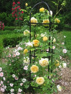 Actually, I'm pinning this for the trellis... I like the cage effect, and it won't require a lot of tying down.