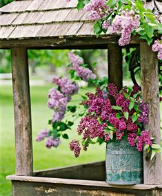 Pale Syringa vulgaris 'Decaisne' hangs over a roof, while dark pink 'Katherine Havemeyer' spills from a bucket. More about lilacs: http://www.midwestliving.com/garden/flowers/lilac-flowers/?page=5