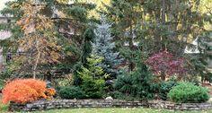 conifer garden idea