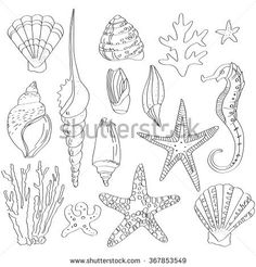 set of sea shells, hand drawn