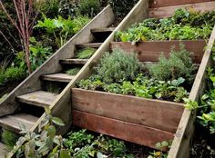 Retaining wall herb garden on a steep slope next to a stair case. We need something like this in our back yard. #herbgardening
