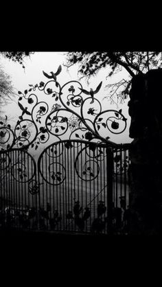 Zilker Botanical Garden gate on a foggy morning- Zilker Park, Austin Texas. Photo by Bill Oriani Garden Gates, Garden Art, Garden Design, Balcony Garden, Garden Tools, Zilker Park, Wrought Iron Fences, Night Circus, Foggy Morning