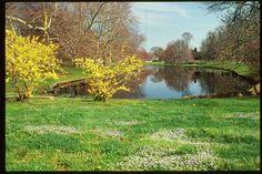 Town Pond East Hampton