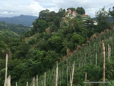 view of Paramin Village over vertical tomato fields in Trinidad; http://travelswithcarole.blogspot.com/2017/05/sights-to-see-paramin-village-trinidad.html