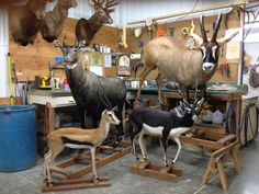 Taxidermy Workshop