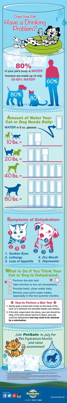 Raise awareness during Pet Hydration Month!!