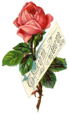 """Pink rose ~ """"Think of me my dear one."""""""