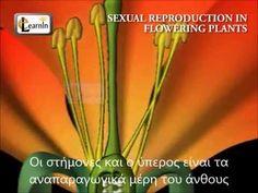 Η αναπαραγωγή στα φυτά Educational Videos, Planting Flowers, Youtube, Youtubers, Youtube Movies