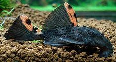 Bubbles Aquarium - Fish