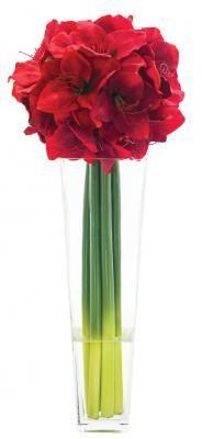 Red amaryllis Arrangement by NDI