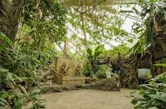 rainforest exhibit - Google Search