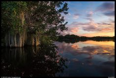 Google+   QT Luong Aug 2, 2013 Trees with Spanish Moss in Paurotis Pond at sunset. Everglades National Park, Florida, USA. Photo details Date taken 8/2/13, 4:09 PM Dimensions 1106 x 746 File name ever56563.large.jpeg File size 246.85K Camera Canon EOS 5D Mark III Focal Length - Exposure 1/4 F Number - ISO 100 Camera make Canon
