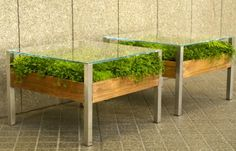 On 7x7 Magazine: Imagine a landscape of lush greenery nestled just below your laptop.  The Living Tables by San Francisco design firm Habitat Horticulture bring new meaning to the term farm-to-table, integrating growing succulents into the offices of Google and other Bay Area corporate giants. #EcoDesign #Green #Office