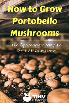 Growing Vegetables A delicious mushroom that I've to grow own at home! Let's me take you how to grow portobello mushrooms! Growing Mushrooms At Home, Garden Mushrooms, Edible Mushrooms, Stuffed Mushrooms, How To Grow Mushrooms, Wild Mushrooms, Organic Vegetables, Growing Vegetables, Culture Champignon