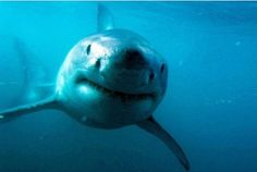 Great white shark Lydia changes course - but is she heading back towards Plymouth?