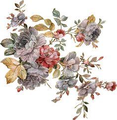 Birth Flowers, Botanical Flowers, Tarot Decks, Flower Art, Wonderland, Digital, Check, Animals, Art Floral