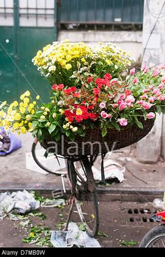 Hanoi, Vietnam - flower seller's bicycle